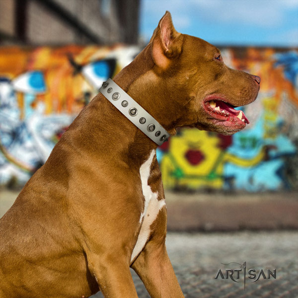 Pitbull comfortable leather dog collar with awesome adornments