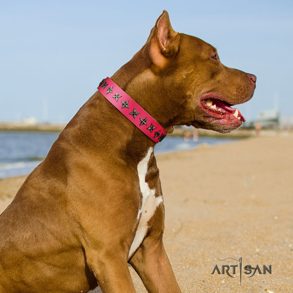 Pitbull comfortable leather dog collar with exquisite embellishments
