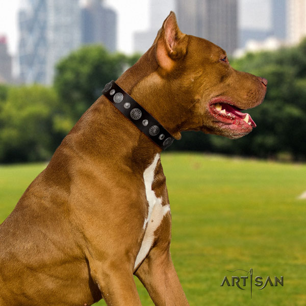 Pitbull handmade full grain leather dog collar with stunning adornments