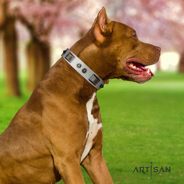 Pitbull handcrafted genuine leather dog collar with extraordinary studs