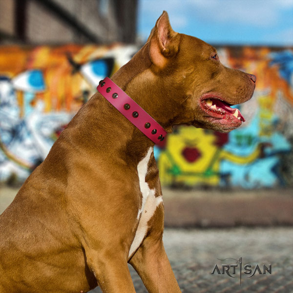 Pitbull impressive genuine leather collar with studs for your four-legged friend