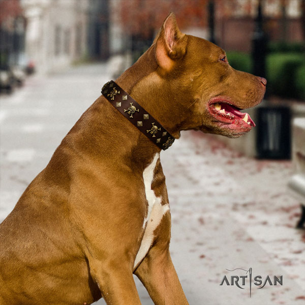 Pitbull easy wearing genuine leather collar with decorations for your dog