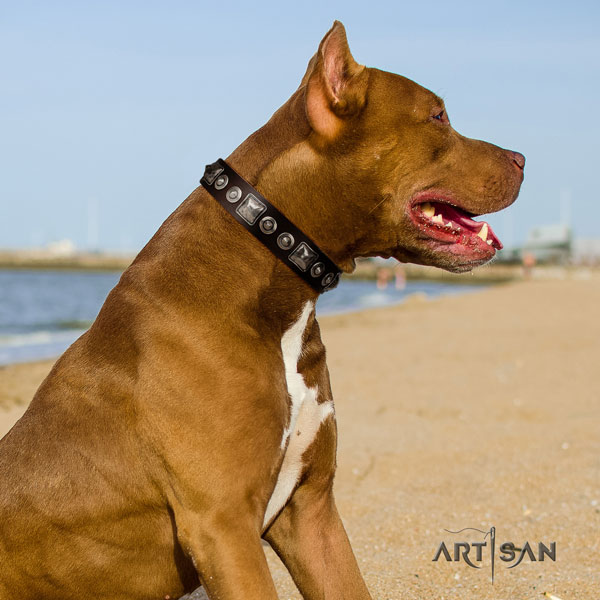 Pitbull best quality full grain genuine leather collar with studs for your canine