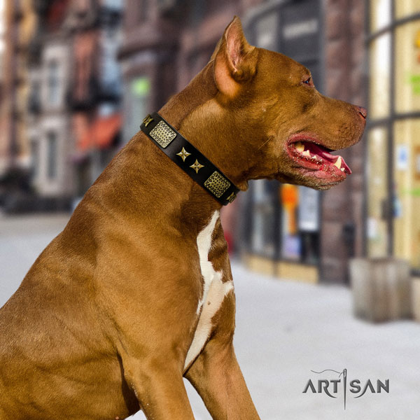 Pitbull unusual genuine leather collar with studs for your dog