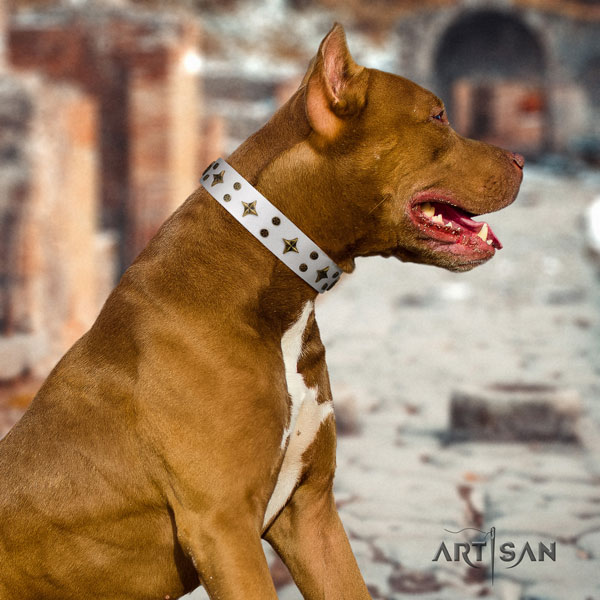 Pitbull awesome full grain genuine leather collar with decorations for your canine