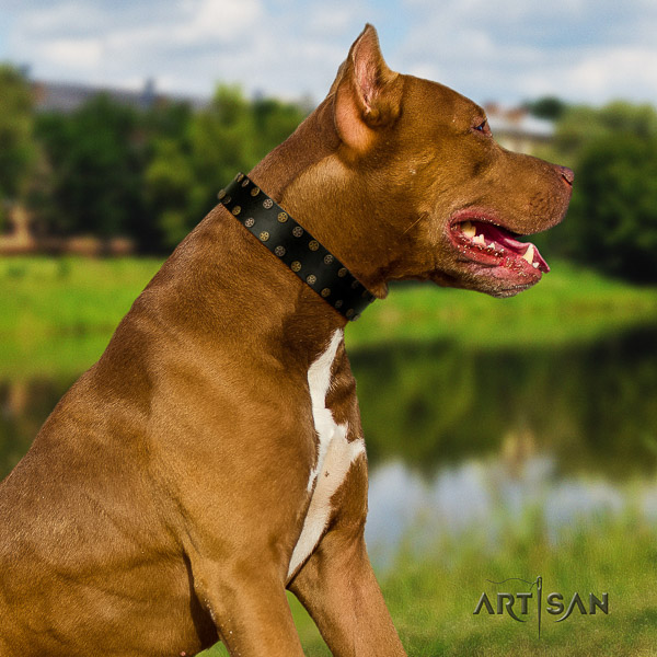 Pitbull stylish adorned natural leather dog collar for stylish walking