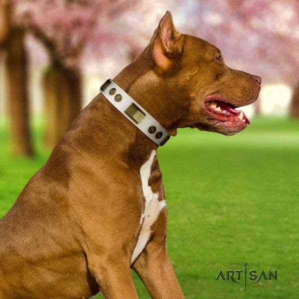 Pitbull top quality full grain natural leather dog collar with exquisite studs