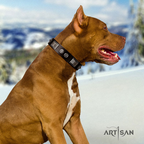 Pitbull adjustable full grain natural leather dog collar with stunning studs