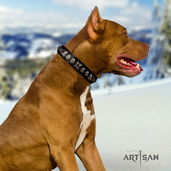 Pitbull easy to adjust full grain genuine leather collar with studs for your four-legged friend