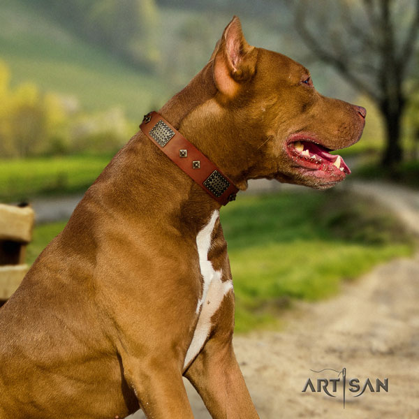 Pitbull adjustable full grain natural leather dog collar with impressive embellishments