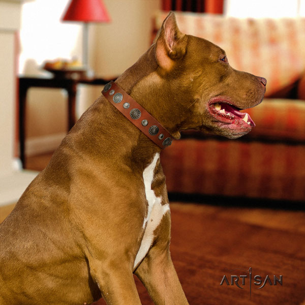 Pitbull perfect fit natural genuine leather dog collar with stunning studs