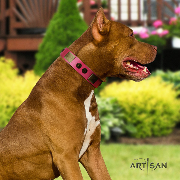Pitbull designer decorated full grain natural leather dog collar for walking