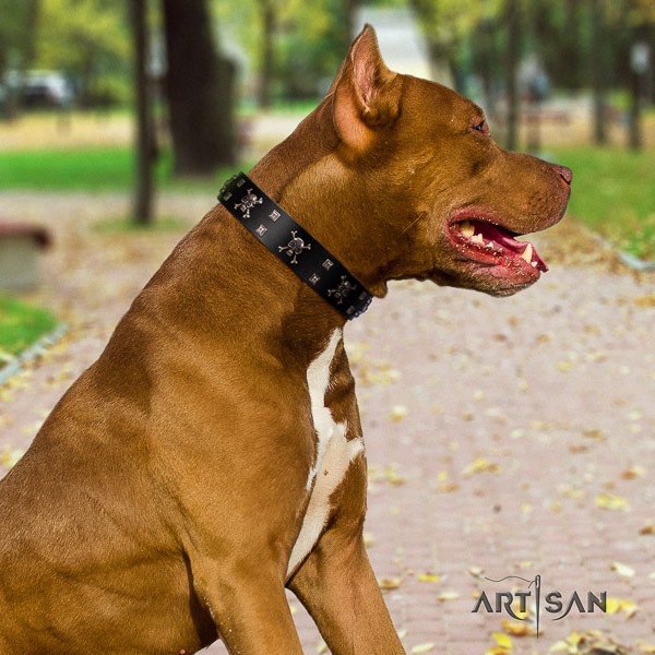 Pitbull stylish design adorned full grain natural leather dog collar for stylish walking