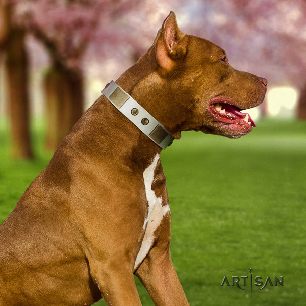 Pitbull significant adorned natural leather dog collar for everyday walking