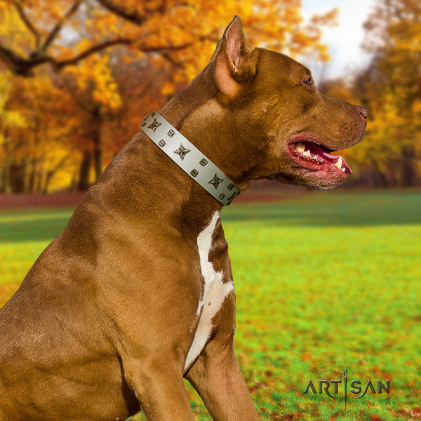 Pitbull incredible decorated natural leather dog collar for everyday walking
