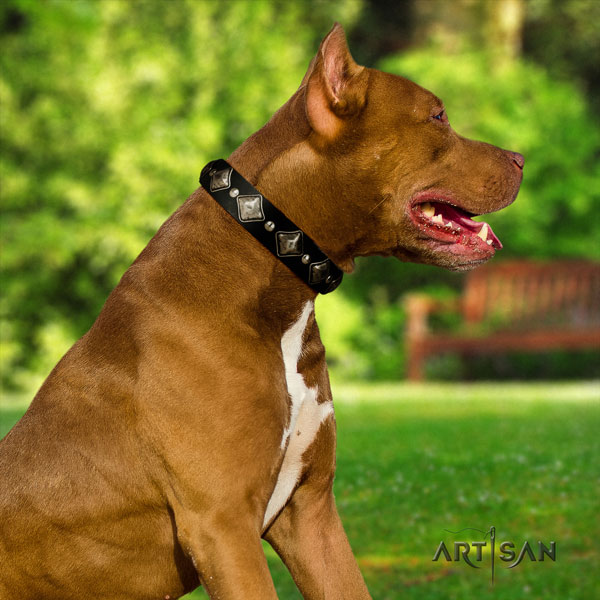 Pitbull easy adjustable full grain leather collar with embellishments for your four-legged friend