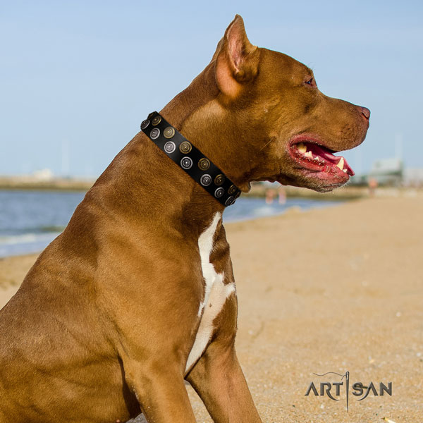 Pitbull extraordinary natural genuine leather collar with decorations for your pet