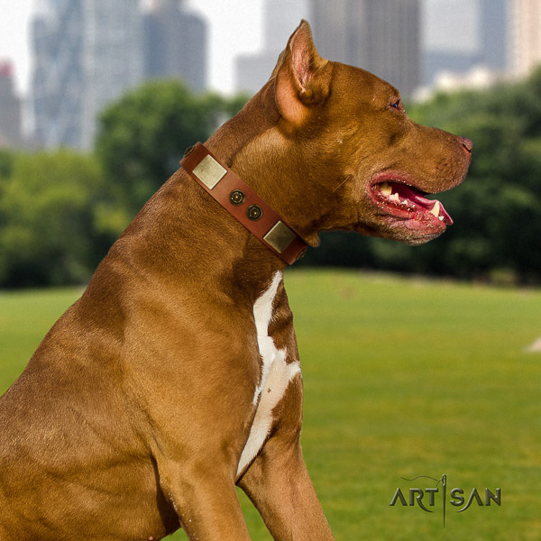 Pitbull impressive adorned natural leather dog collar for everyday walking