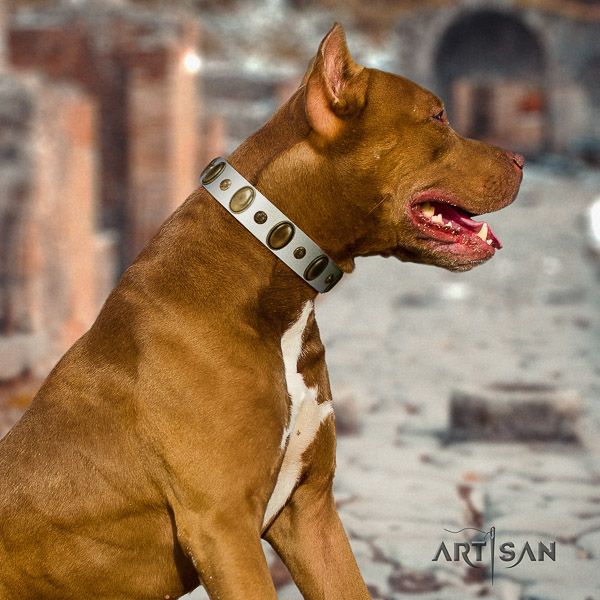 Pitbull stunning decorated full grain natural leather dog collar for everyday use
