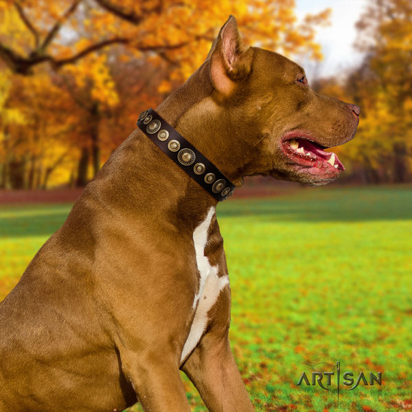 Pitbull handcrafted full grain genuine leather collar with embellishments for your canine