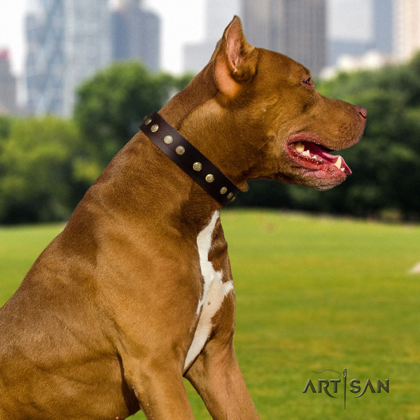 Pitbull inimitable full grain natural leather collar with decorations for your four-legged friend