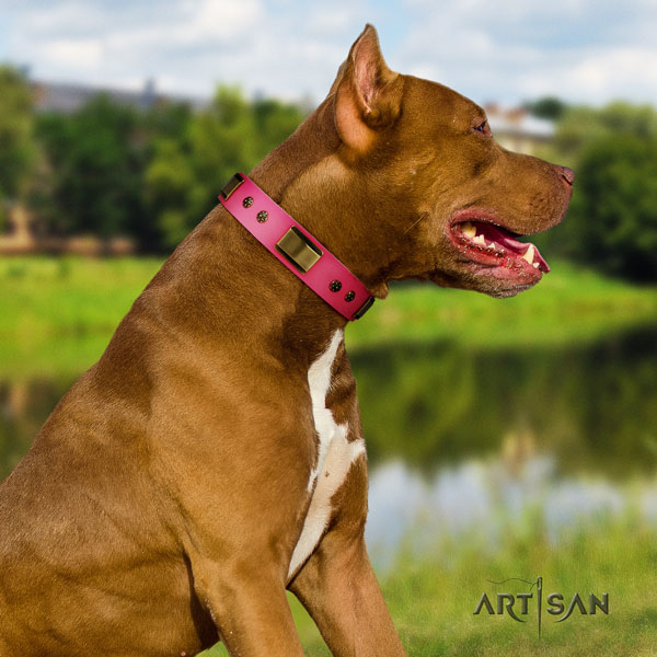 Pitbull easy wearing full grain natural leather dog collar with impressive adornments
