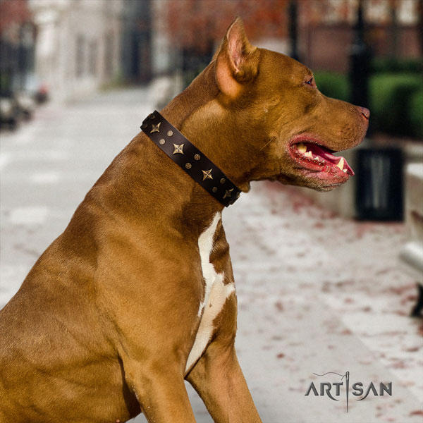 Pitbull perfect fit genuine leather collar with adornments for your dog