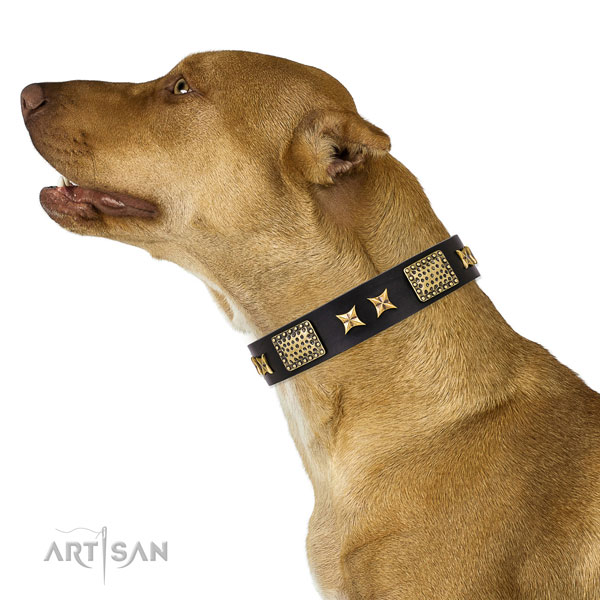Pitbull embellished full grain leather dog collar for daily walking