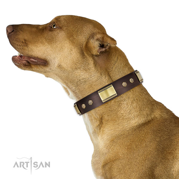Pitbull unusual full grain natural leather dog collar for fancy walking