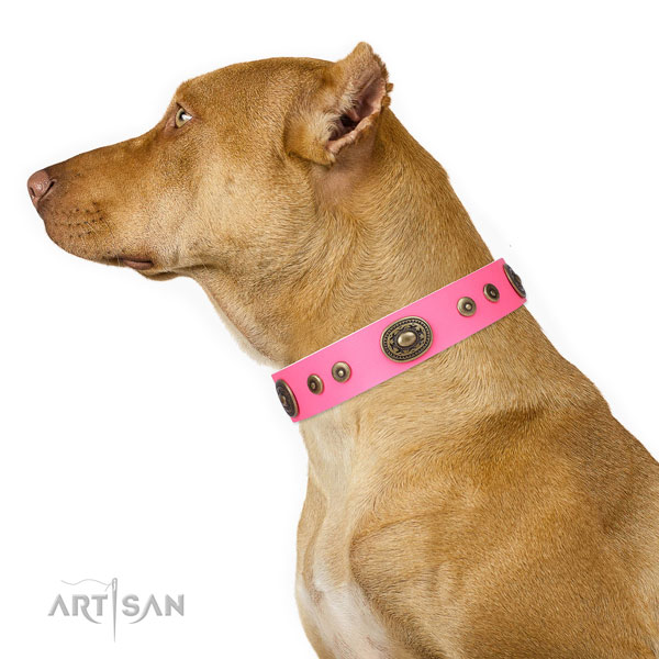 Pitbull embellished natural genuine leather dog collar for fancy walking