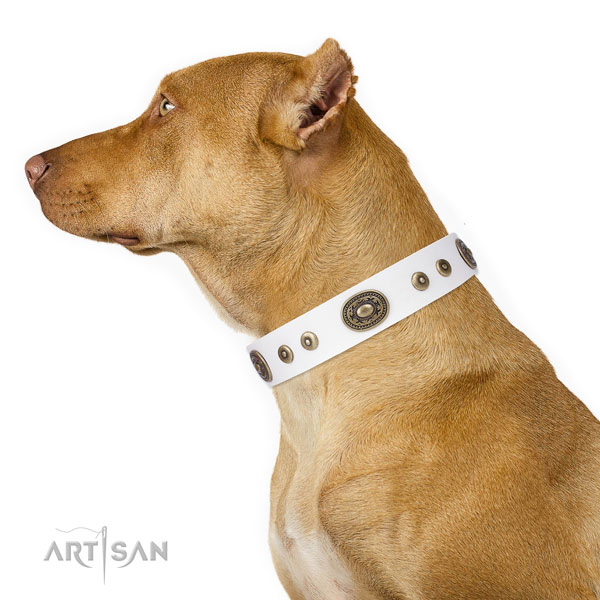 Pitbull perfect fit natural genuine leather dog collar for comfortable wearing