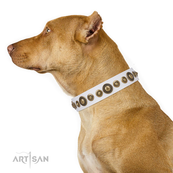 Pitbull incredible full grain leather dog collar for daily use