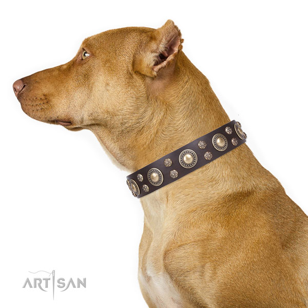 Pitbull easy to adjust full grain natural leather dog collar for fancy walking