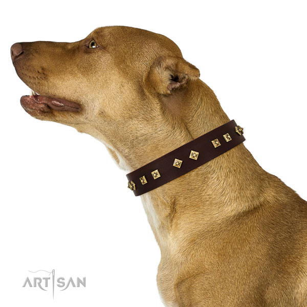 Pitbull easy to adjust leather dog collar for everyday use