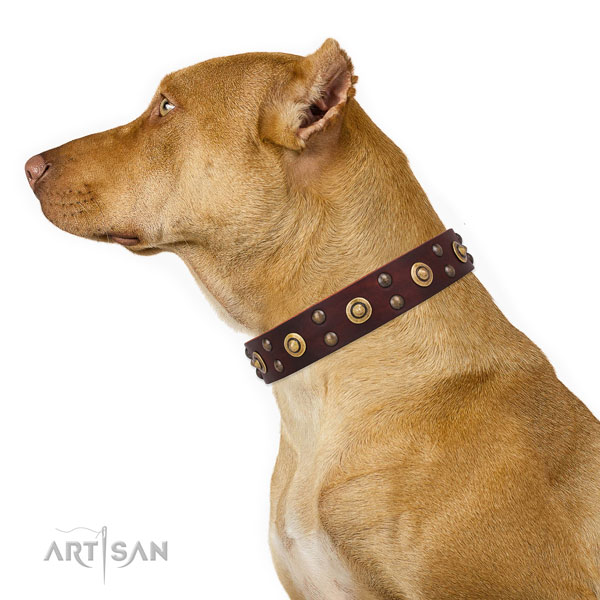 Pitbull inimitable natural genuine leather dog collar for everyday walking