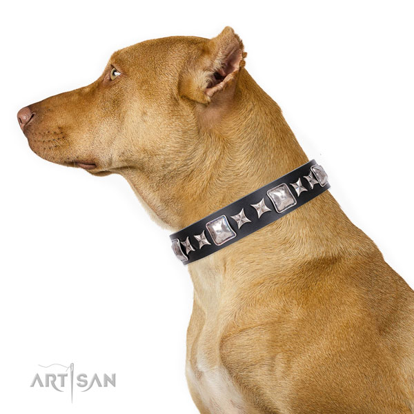Pitbull adjustable full grain natural leather dog collar for everyday use