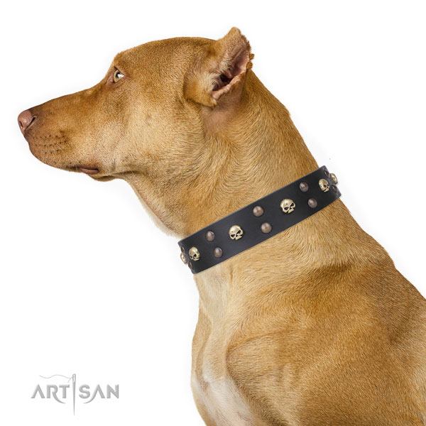 Pitbull handmade genuine leather dog collar for everyday walking
