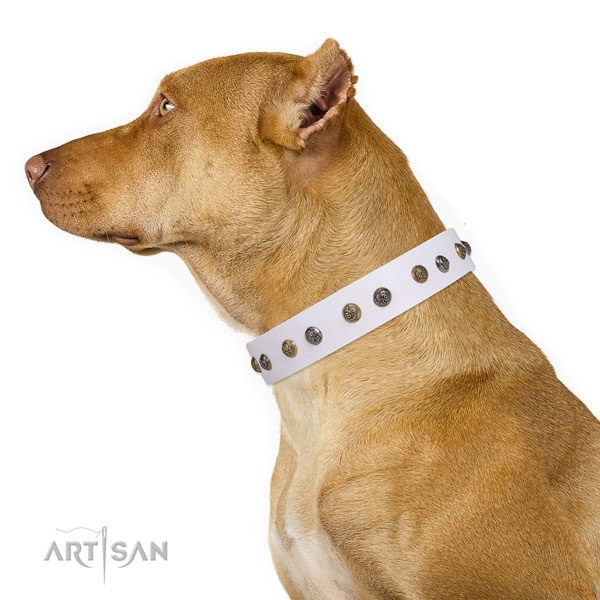 Pitbull inimitable full grain natural leather dog collar for everyday use
