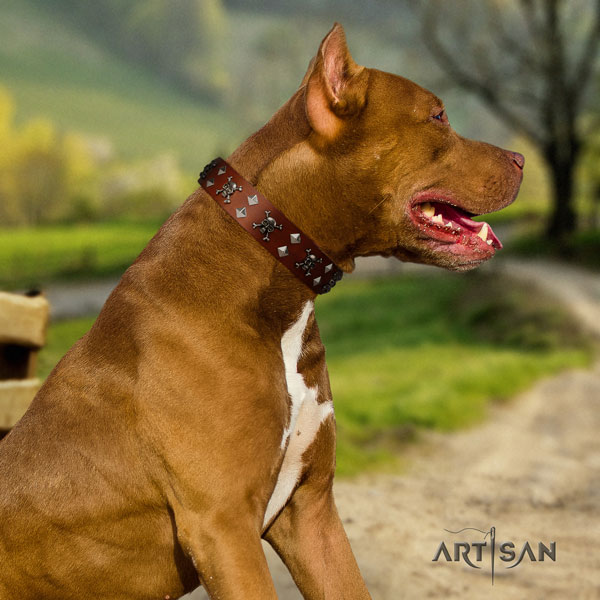 Pitbull fashionable natural genuine leather collar with embellishments for your four-legged friend