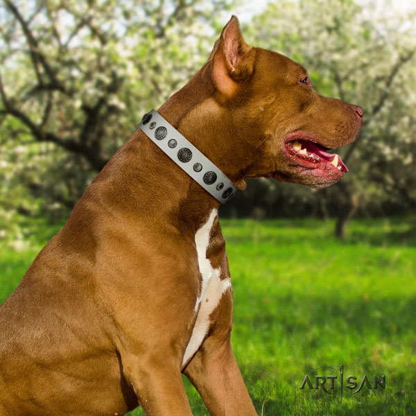 Pitbull easy to adjust full grain leather dog collar with impressive decorations