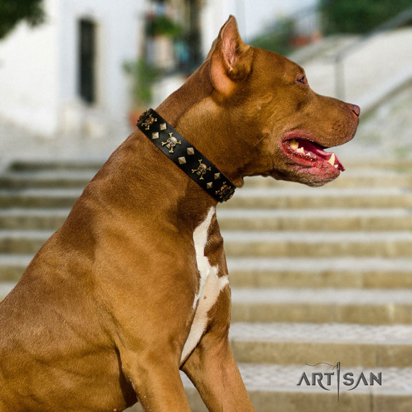 Pitbull impressive natural genuine leather collar with adornments for your pet