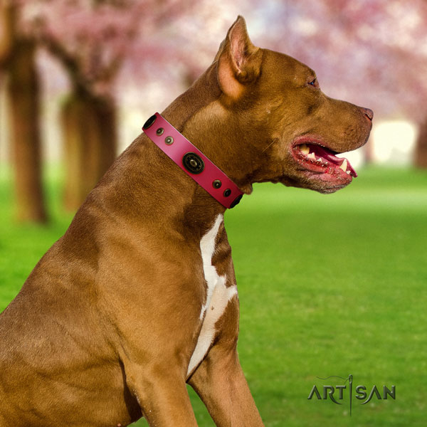 Pitbull easy wearing genuine leather collar with studs for your canine
