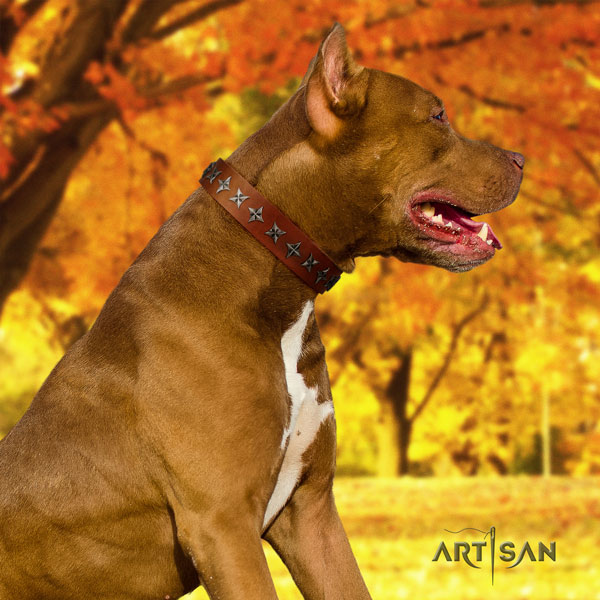 Pitbull handcrafted natural genuine leather dog collar with fashionable embellishments