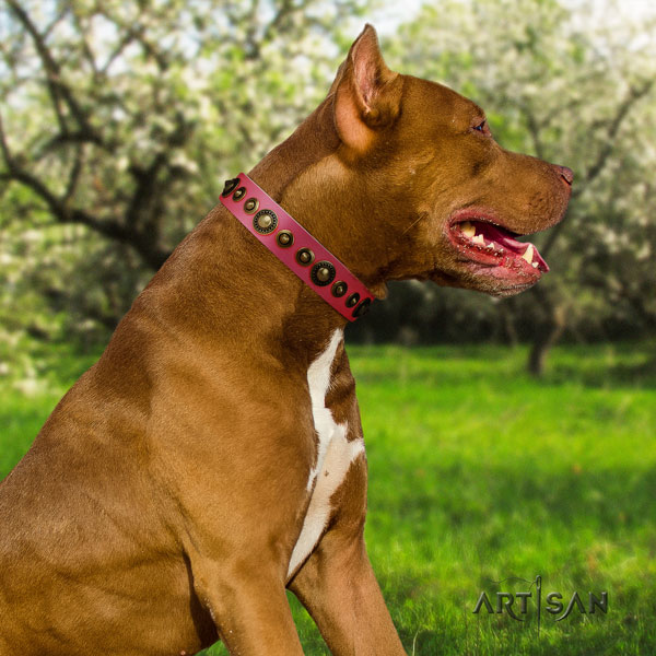 Pitbull stylish genuine leather collar with decorations for your canine