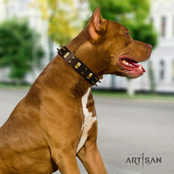 Pitbull stunning full grain leather collar with adornments for your pet
