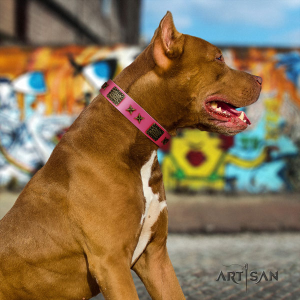 Pitbull inimitable full grain leather collar with decorations for your four-legged friend