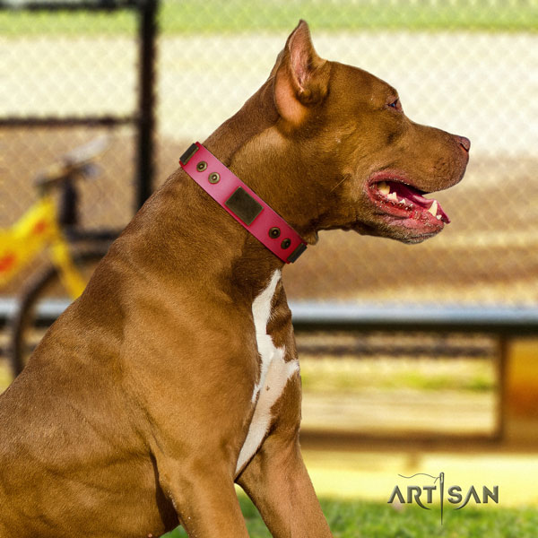 Pitbull easy adjustable leather dog collar with amazing studs