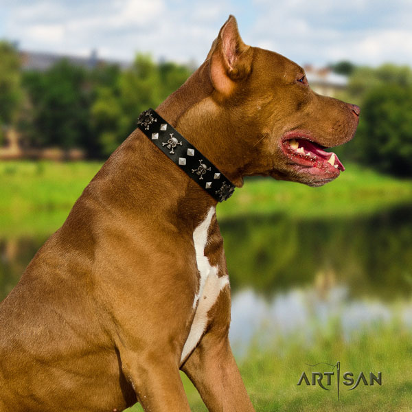 Pitbull unusual full grain natural leather collar with adornments for your pet