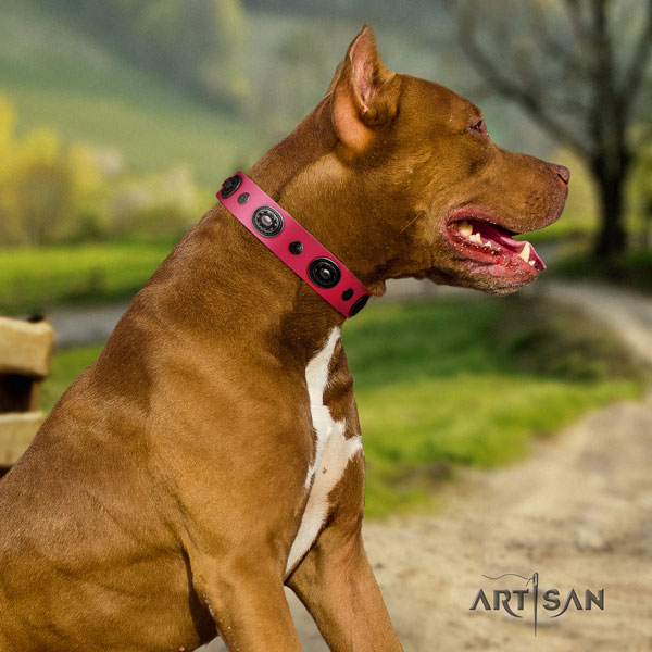 Pitbull stylish design leather collar with adornments for your doggie