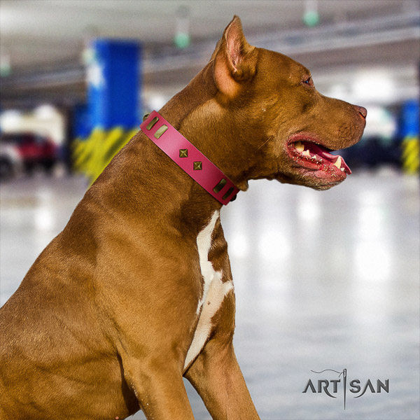 Pitbull inimitable adorned natural leather dog collar for comfy wearing
